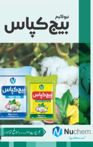 Cotton Seed Brochure1