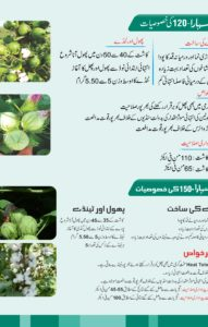 Cotton Seed Brochure2