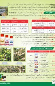 Sahara 120 Brochure3