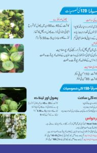 Sahara Cotton Seed Brochure2