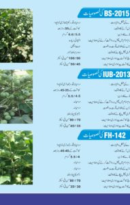 Sahara Cotton Seed Brochure3